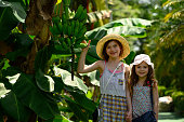 Children touching bananas in the tropical climate of Costa Rica