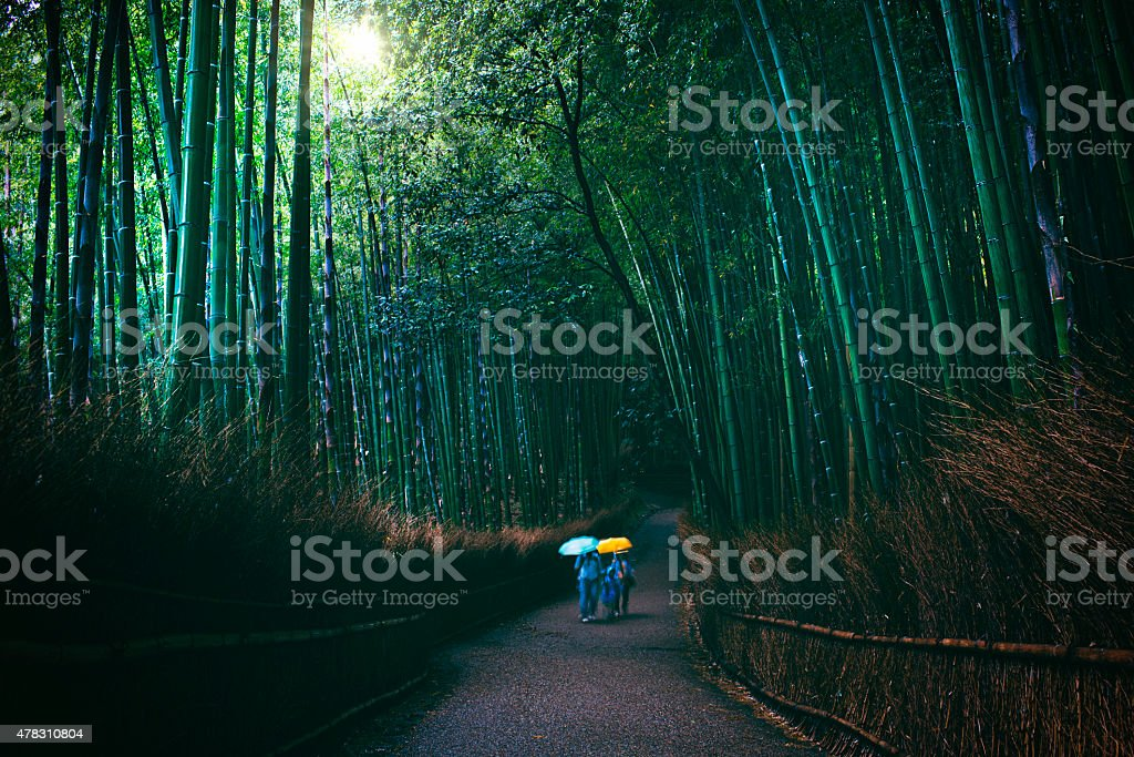 Family visiting bamboo forest on a dark rainy day stock photo