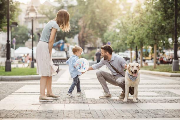 gångavstånd familjehund - walking home sunset street bildbanksfoton och bilder