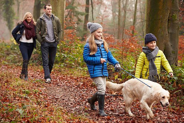 family walking dog through winter woodland - hund skog bildbanksfoton och bilder