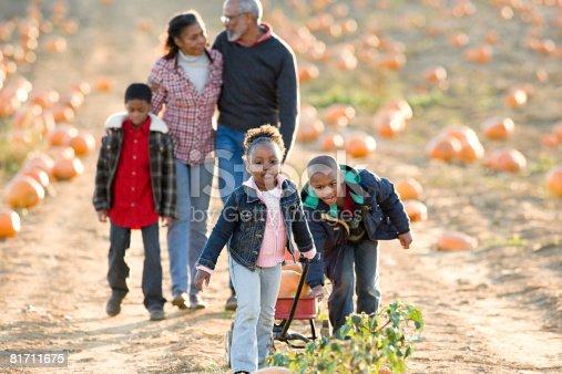81711567 istock photo A family walking through a field of pumpkins 81711675