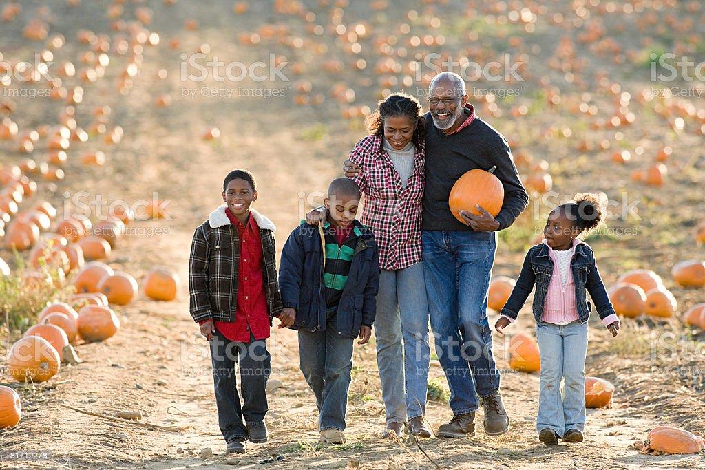 A family walking through a field of pumpkins stock photo