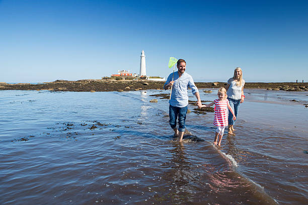Family Walking Through the Sea A happy family walk through the sea with fishing nets and buckets together. St Mary's lighthouse is in the background. northeastern england stock pictures, royalty-free photos & images