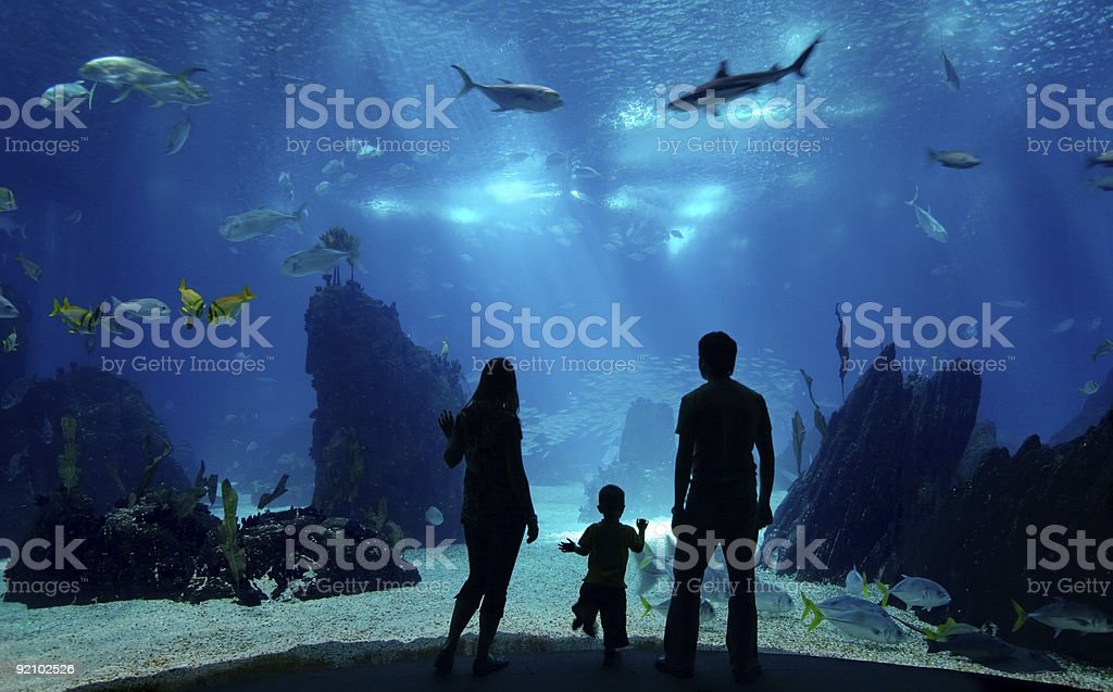 Family watching an underwater tank with corals and fish​​​ foto