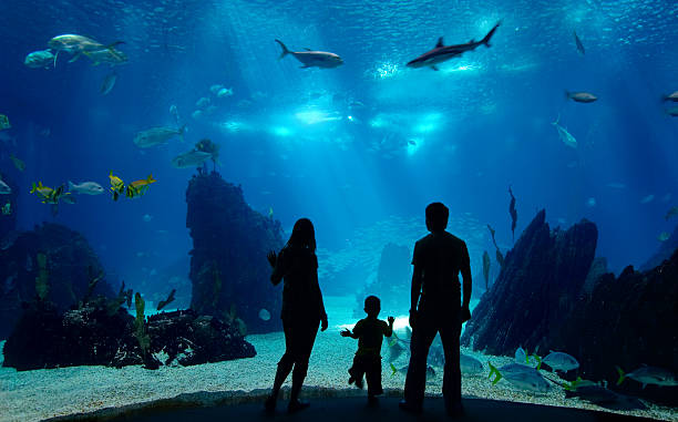 Family watching an underwater tank with corals and fish Underwater family. Silhouettes of young family of three enjoying views of underwater life. Family having free time in Oceanarium. aquarium stock pictures, royalty-free photos & images