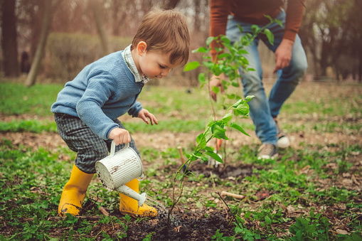 Family watering tree while gardening on Arbor day in springtime