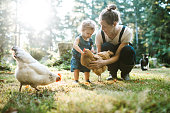 A mother and her toddler aged little girl pet and feed their flock of chickens on a warm late summer morning at their home.  Shot in Washington state.