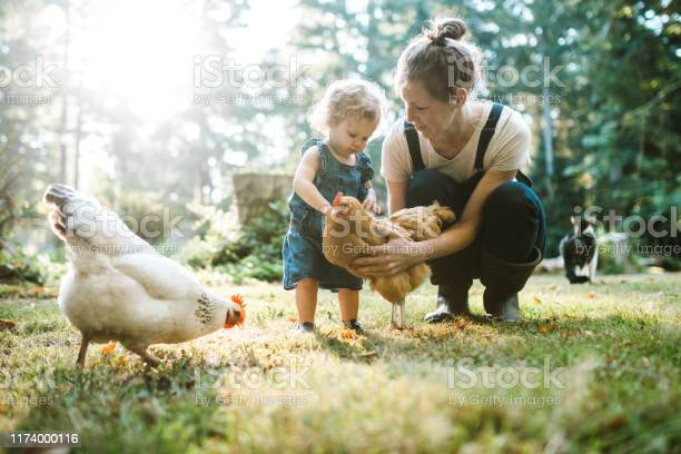 Family with chickens at small home farm picture id1174000116?b=1&k=6&m=1174000116&s=612x612&h=eg7hjcngddntuathja0jej3twih2y1ypkasvqqwjea8=