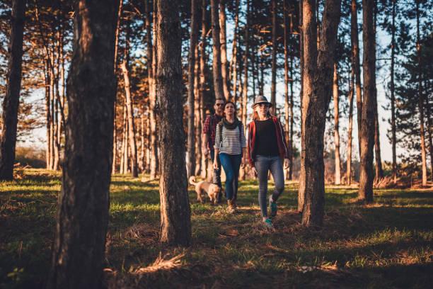 Family with dog hiking on a pine forest picture id1170451148?b=1&k=6&m=1170451148&s=612x612&w=0&h=tl zmqaukfjovozltlqmxafnd25b3nda0evkgjutrho=