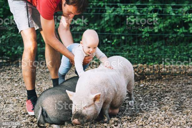 Family with kids in the petting zoo picture id653775436?b=1&k=6&m=653775436&s=612x612&h=yrls5mg3foilbed4f 8idatww4rvpvi47otad1vulbs=
