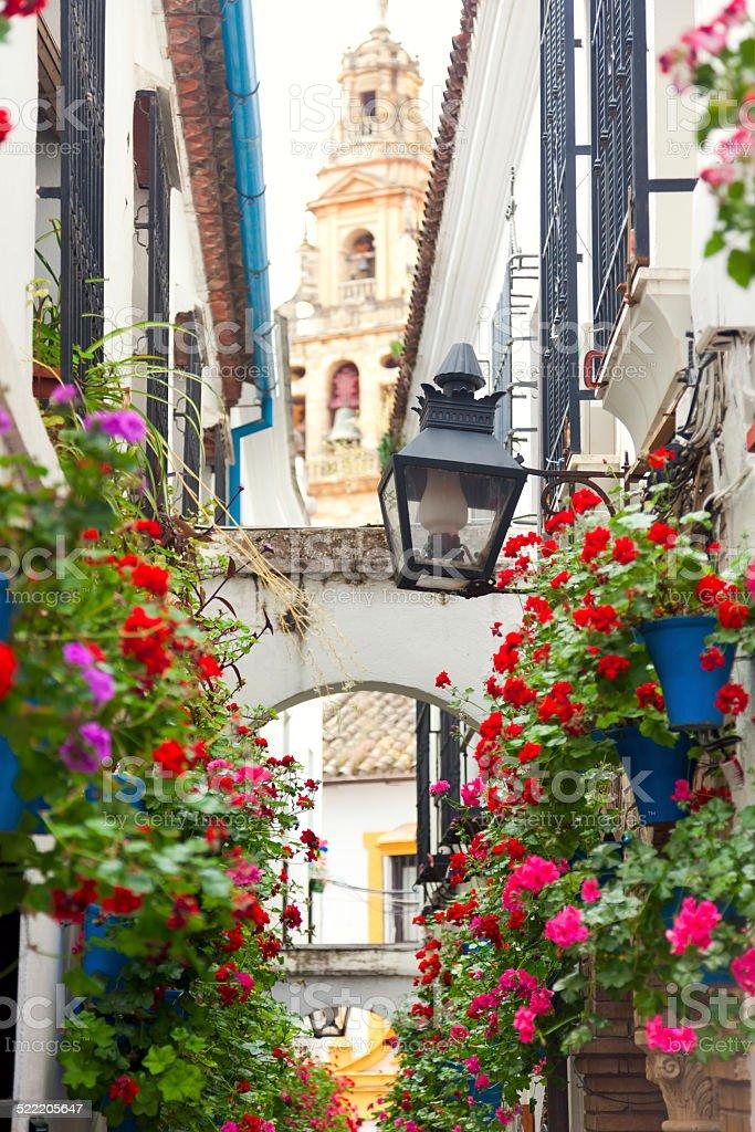 Famos Street Flowers decorated, Cordoba, Spain, Mediterranean Eu stock photo