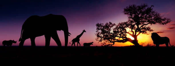 Famous african animals sunset silhouettes travel wildlife and picture id1149550648?b=1&k=6&m=1149550648&s=612x612&w=0&h=t6vt9gzpa5f i4lcoqlohbpk2fq89 q3bkzt9veoblk=