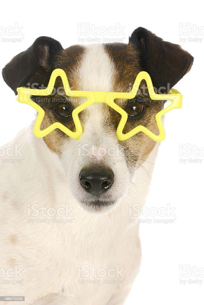 famous dog stock photo