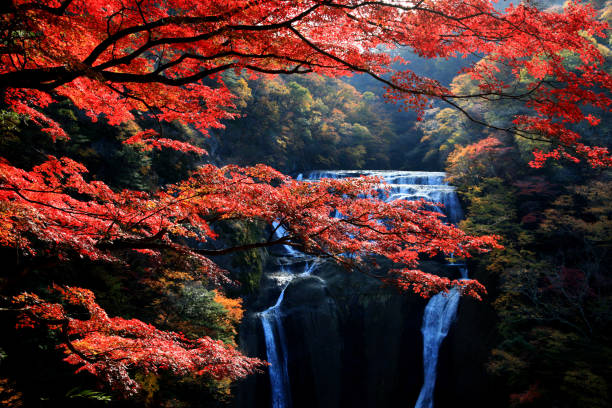 Famous Fukuroda waterfalls during autumn season Fukuroda waterfalls, one of the Three Great Waterfalls in Japan (alongside Kegon Falls in Nikko and Nachi Falls in Kumano), during colorful autumn in Ibaraki, Japan maple leaf photos stock pictures, royalty-free photos & images