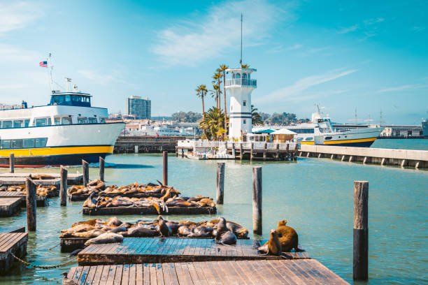 Berühmter Pier 39 mit Seelöwen, San Francisco, USA – Foto