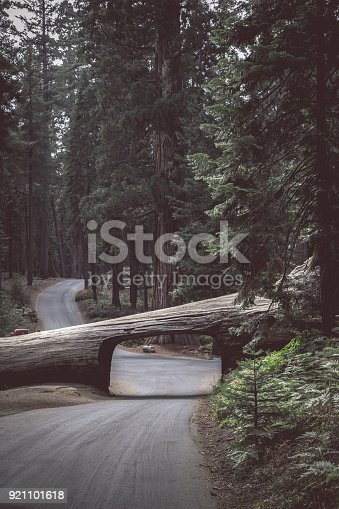 Panoramic vertical view of famous Tunnel Log with Crescent Meadow Road in Giant Forest on a beautiful moody cloudy day with retro vintage Instagram style filter effect, Sequoia National Park, California, USA