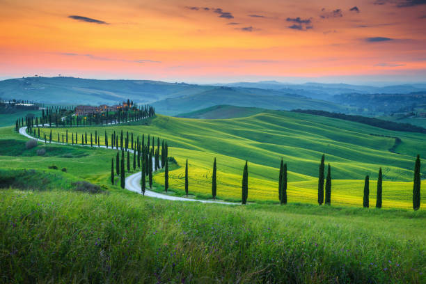 famous tuscany landscape with curved road and cypress, italy, europe - возвышенность стоковые фото и изображения