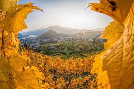 Famous vineyards in Wachau, Spitz, Austria