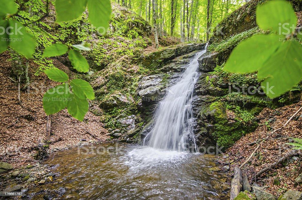 Famoso cascada entre forrest leafs en resorte foto de stock libre de derechos