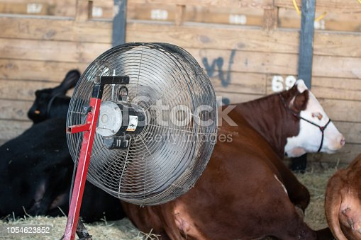 istock Fan cooling show cattle at a livestock show 1054623852