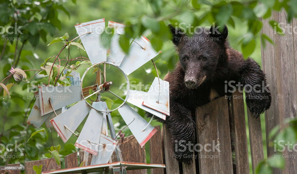 Fan Cub stock photo