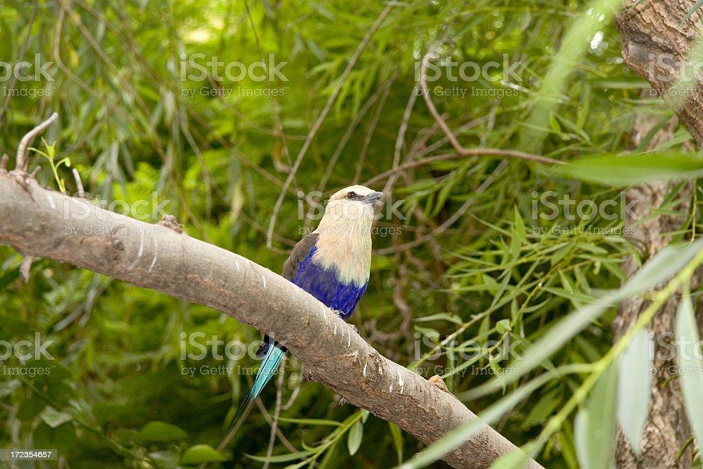 Fancy Bird royalty-free stock photo