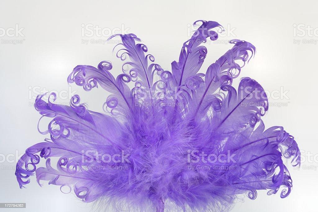Fancy purple Feather Fan on white background royalty-free stock photo