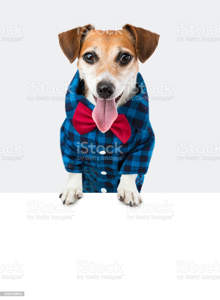 Fancy trendy smiling pup stock photo