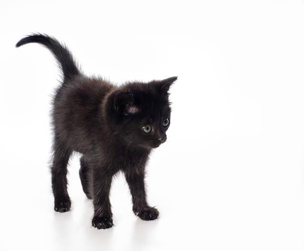 Fanny black kitten picture id159127845?b=1&k=6&m=159127845&s=612x612&w=0&h=xrbs3oronjpjc3slzh myxthgvjjixdfzsvrqw seu0=