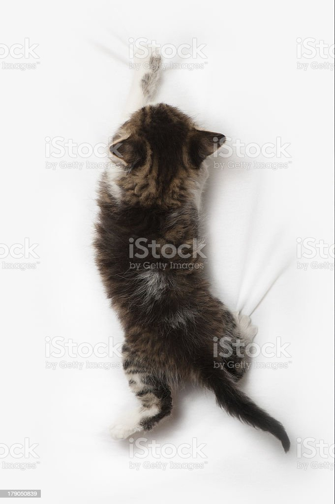 Fanny striped kitten royalty-free stock photo