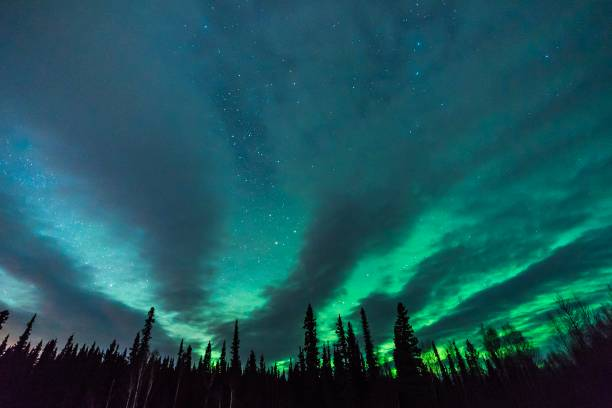 fantastic clouds, aurora borealis, and stars fan out behind silhouetted tree line - aurora boreale foto e immagini stock