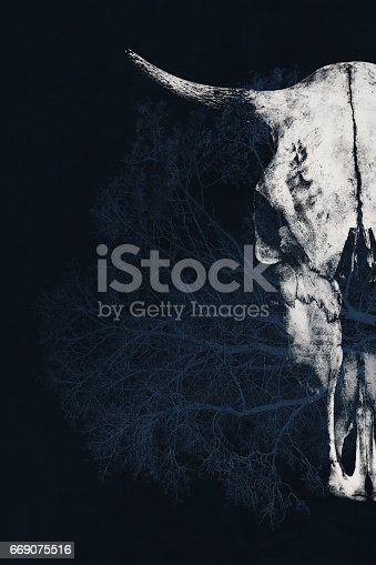 istock Fantastic creative photo with a double exposure effect - a bull's skull and a tree 669075516