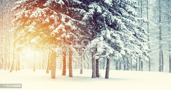 Fantastic Fairytale Magical Landscape View Christmas Tree Forest Park in Winter on a Sunny Day During a Snowfall. Concept Christmas Winter New Year Scenery background.