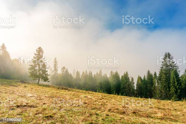 Photo of fantastic foggy weather in autumn