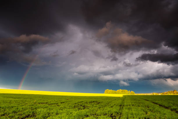 Fantastic green field at the dramatic overcast sky. Ukraine, Europe.