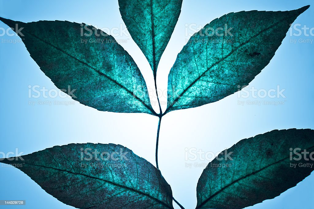 Fantastic leaves royalty-free stock photo
