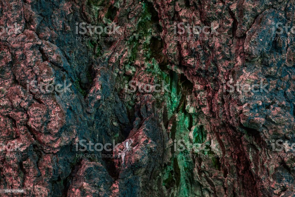 Fantastic Multicolored Tree Bark Texture Mysterious And Enchanting