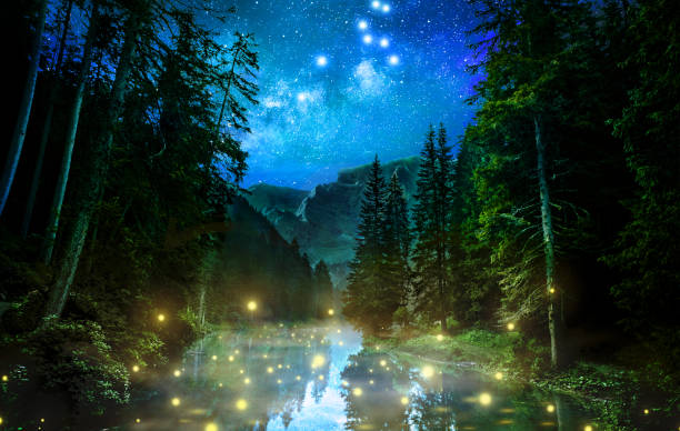 Fantastic night forest stock photo