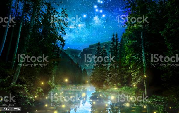 Photo of Fantastic night forest