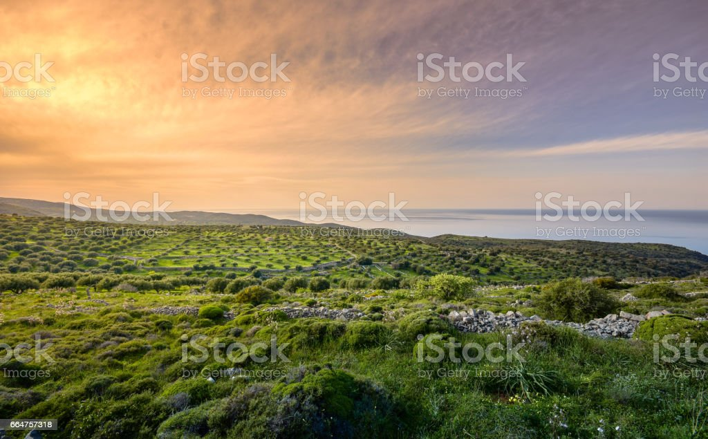 Fantastic olive tree field at sunset with colorful overcast sky and sea, Crete, Greece stock photo