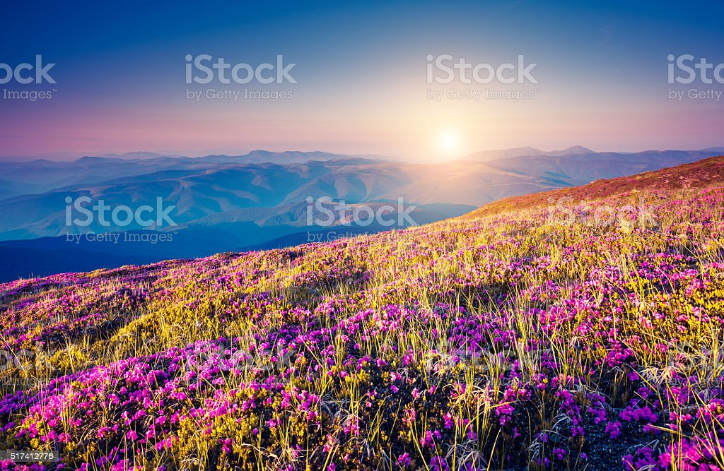 Fantastic pink flowers stock photo
