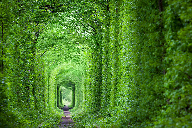 素晴らしい現実への愛、緑の木々と鉄道 - ウクライナ ストックフォトと画像
