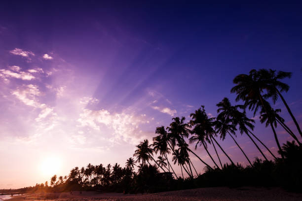 Fantastic sunset on the beach stock photo