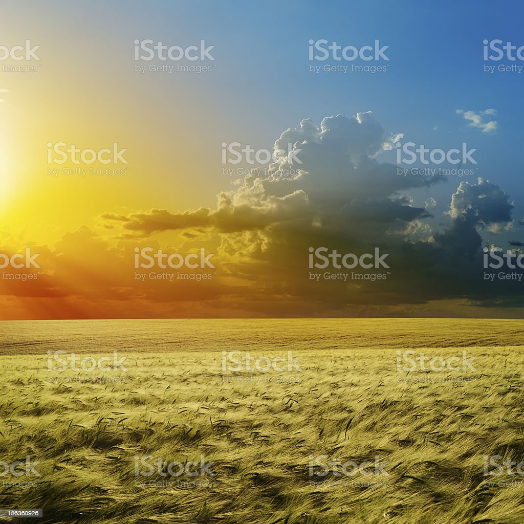 fantastic sunset over green field royalty-free stock photo