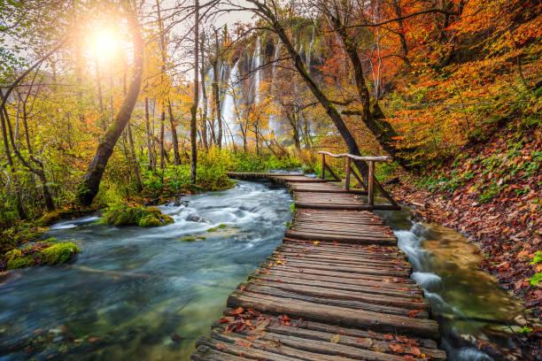 fantastische touristische weg im bunten herbstwald, plitvicer seen, kroatien - nationalpark plitvicer seen stock-fotos und bilder