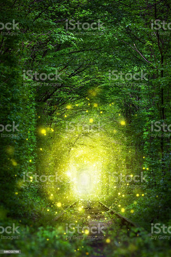 Fantastic Trees Scene - Tunnel of Love with fairy light stock photo