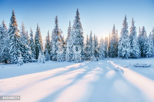 istock Fantastic winter landscape. Magic sunset in the mountains a fros 645466274