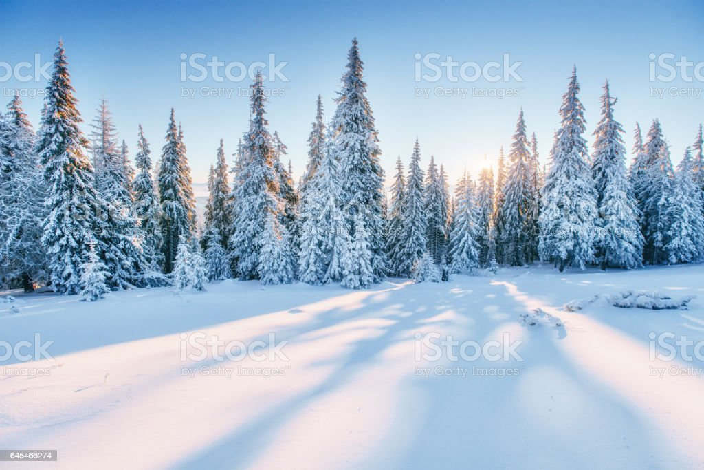 Fantastic winter landscape. Magic sunset in the mountains a fros stock photo