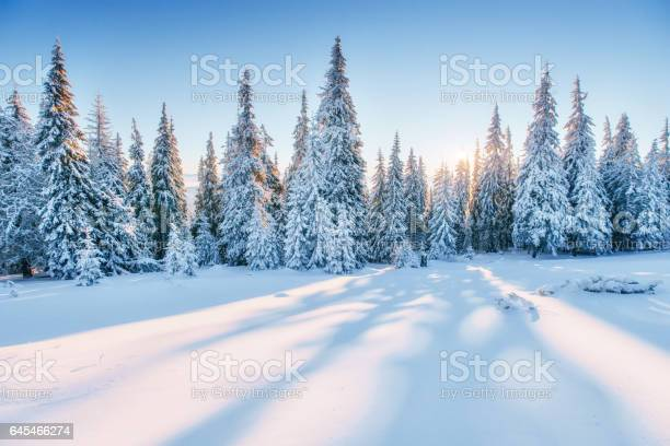 Photo of Fantastic winter landscape. Magic sunset in the mountains a fros