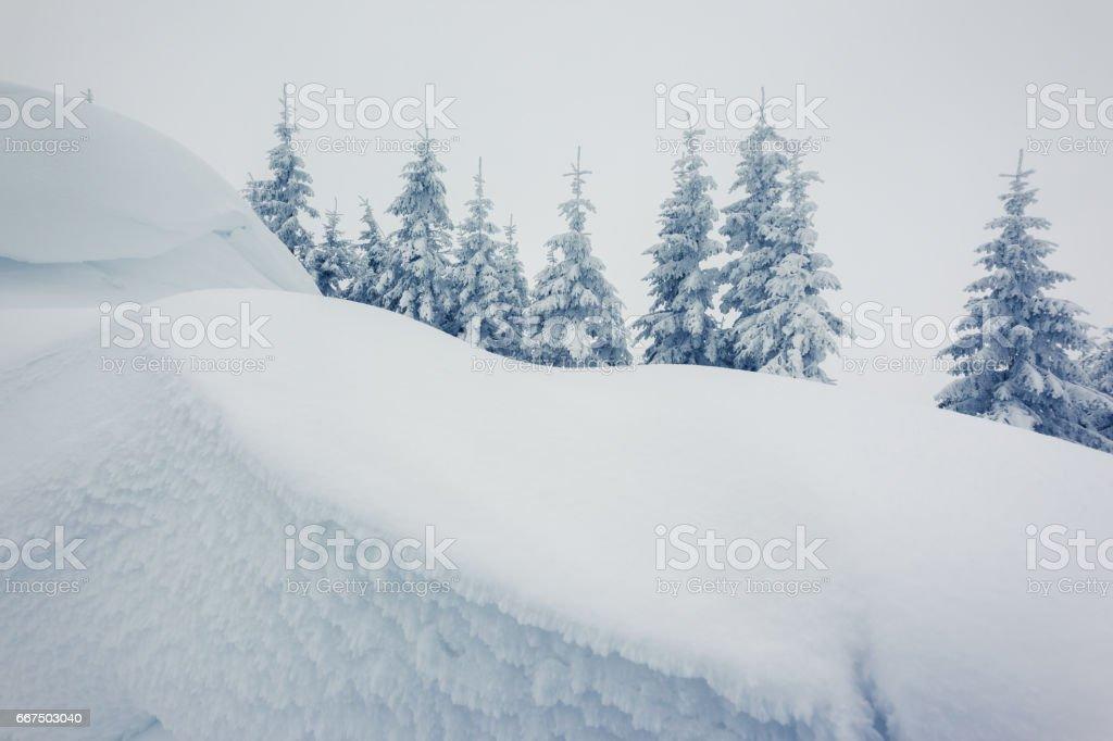 Fantastic winter landscape on Carpathian mountain, Ukraine, Europe. Beauty world. foto stock royalty-free